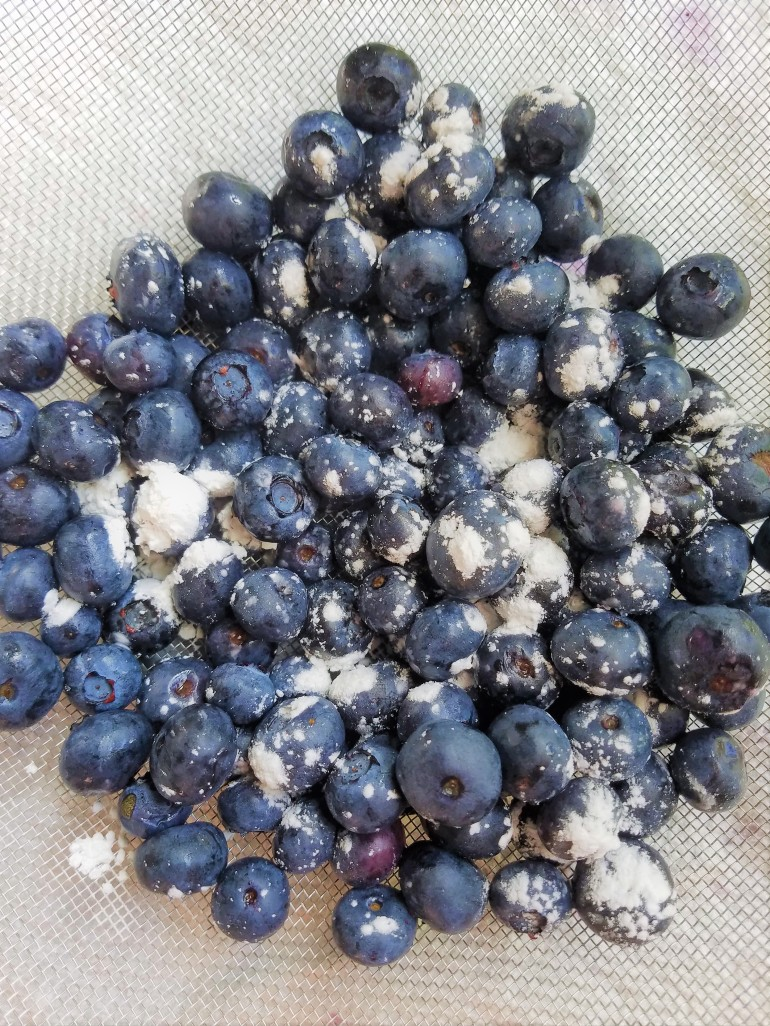 Blog Blueberries.jpg