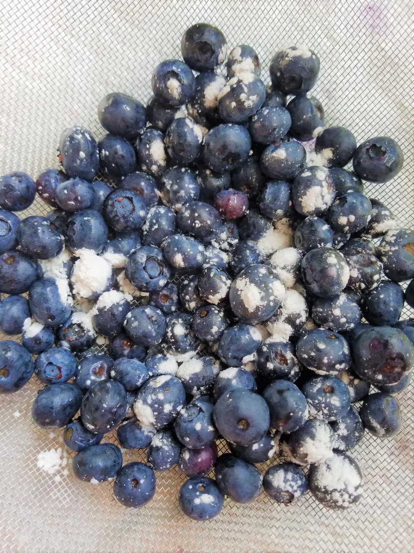 Blog Blueberries.jpg